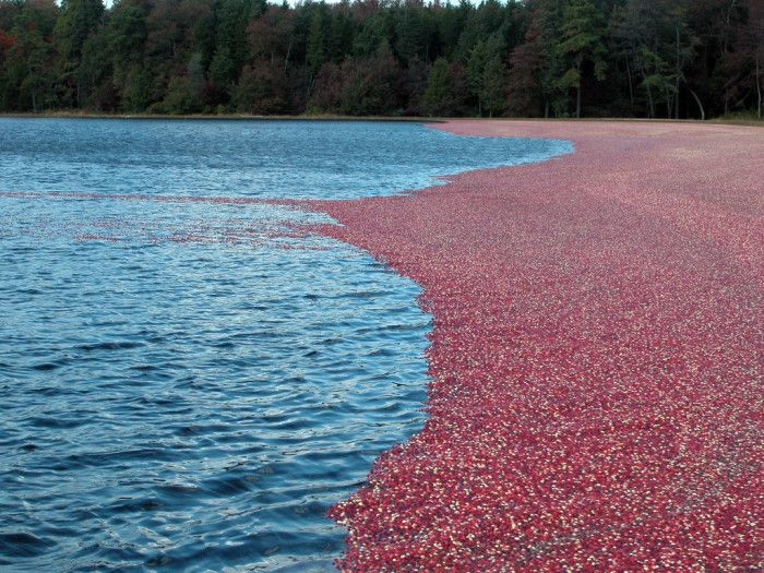 9. Celebrate cranberries at the Chatsworth Cranberry Festival.