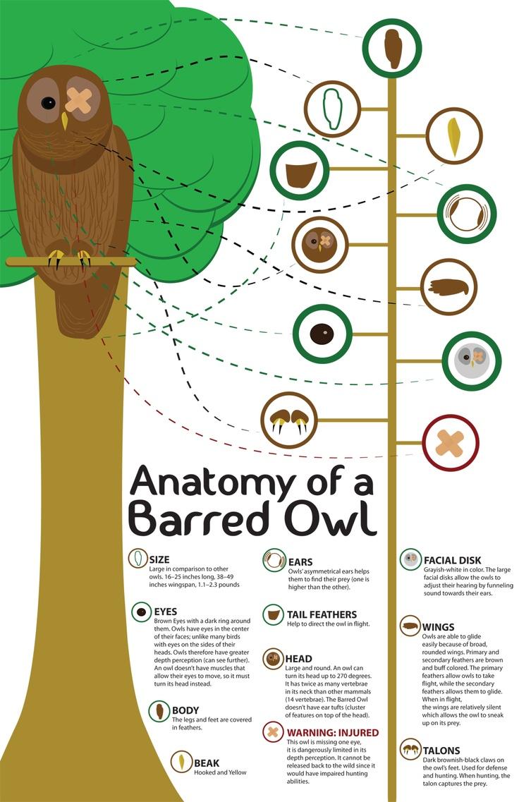 Information Graphic Design.