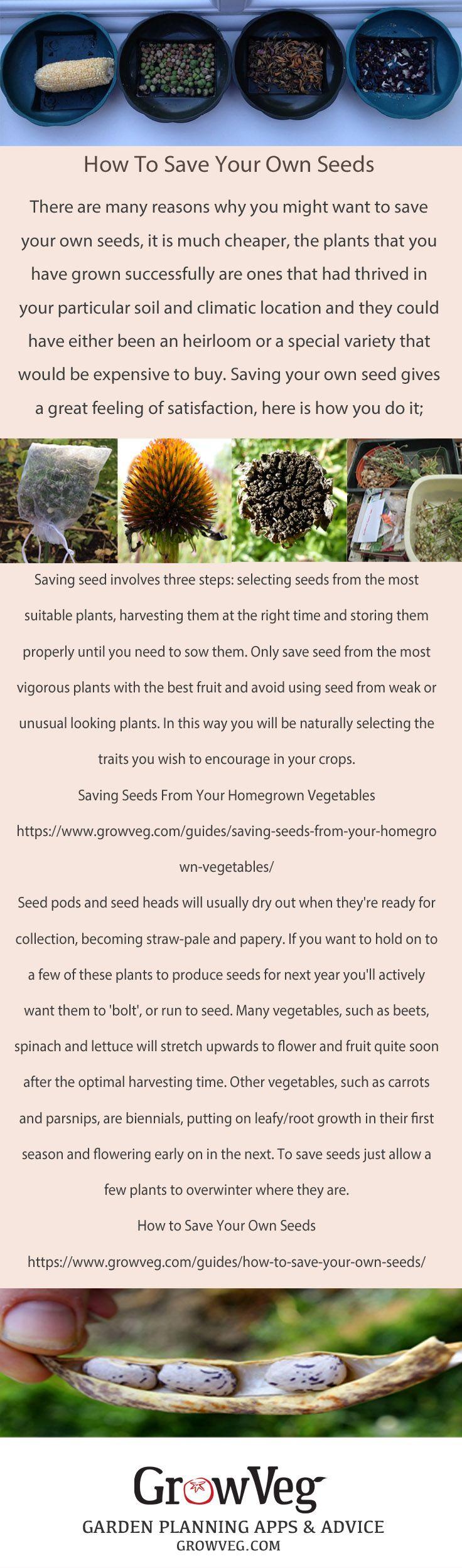 Vegetables Garden, Vegetable Gardening, Gardening Tips, Garden Planner, How  To Save Seeds, Homestead Gardens, Garden Seeds, Saving Seeds, Allotments