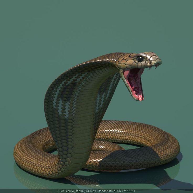 http://www.cgtrader.com/vefilanna CG rigged 3d model cobra snake Cobra 3D Model 3d cobra snake tutorial 1 __ 3D king cobra snake skeleton animal reptile joseclemente serpent skull poisonous snakeskin dangerous deadly beast teeth bite india asia crawling zoology