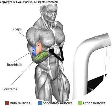 BICEPS - STANDING ONE ARM CABLE CURL
