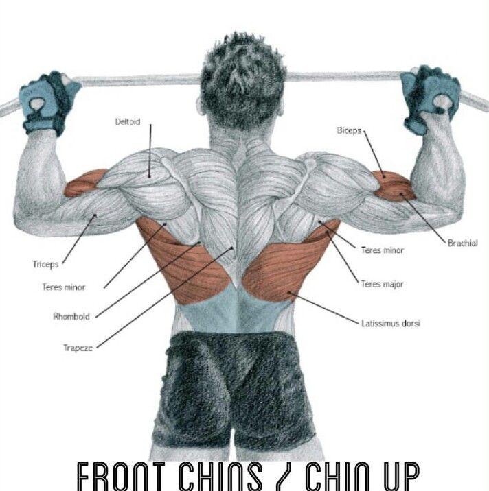 256 besten Muscle Bilder auf Pinterest | Muskelaufbau, Übungen und ...