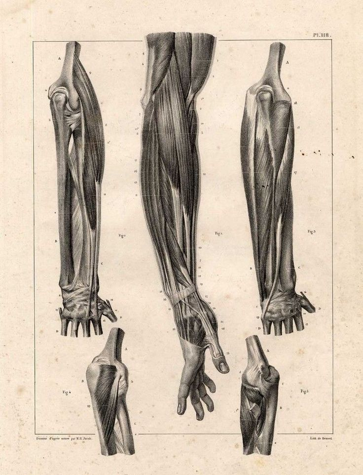 Gemütlich Mimik Muskeln Anatomie Ideen - Anatomie Ideen - finotti.info