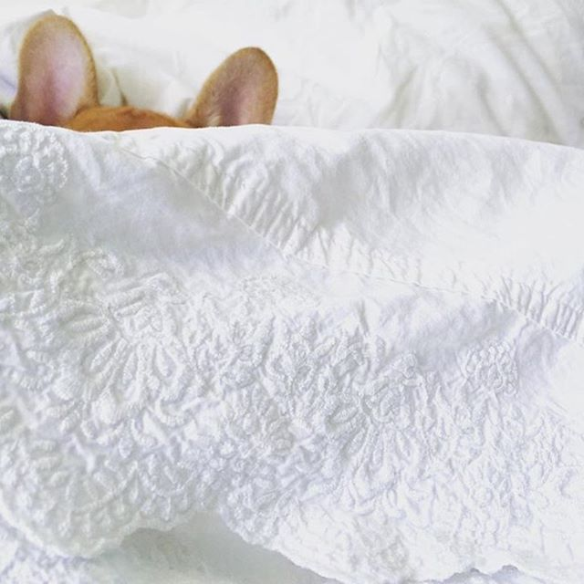 Bed... The perfect place to hide from tomorrow  #ificantseeyouyoucantseeme  via @olive_in_miami