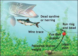 How to catch gravel pit pike