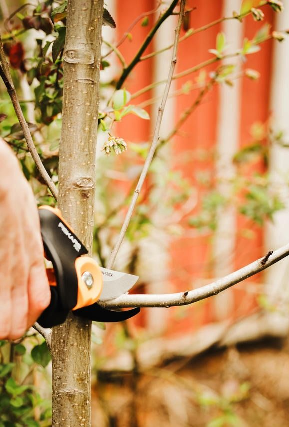 It's about that time to get back in your yard. Learn the benefits of pruning and how best to take care of your bushes, shrubs, trees, plants, flowers and herbs from our tutorial!