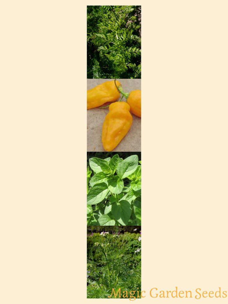 Samen Set 'Harissa':  Magic Garden Seeds - Der Sämereien Versand