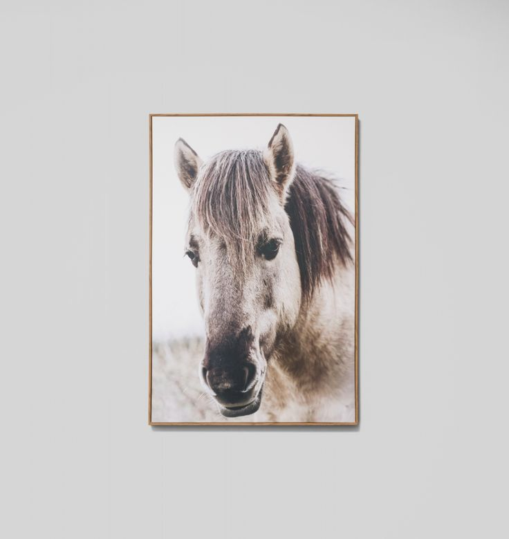 Country Mare | Framed Canvas Print | The Block Shop