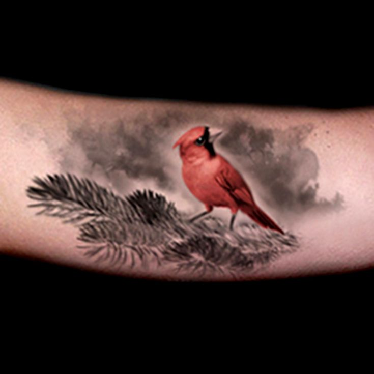 Realistic red cardinal tattoo done by Brandon Marques. Timeless Tattoo Studio, Toronto, ON. For appointments and info visit our website or email: info@timelesstattoos.ca.