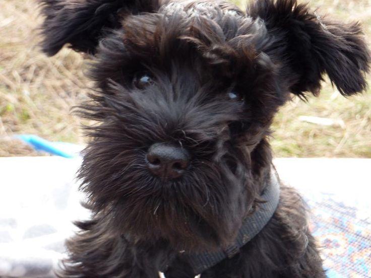 Hugo's first day at Puppy School http://ift.tt/2lWsYQg