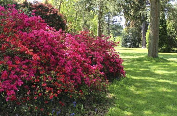 Viele denken, ein Schattengarten kann nicht schön gestaltet werden. Doch: Viele Stauden, Gemüse, Obst und Kräuter wachsen hier. Tipps für Schattengarten.