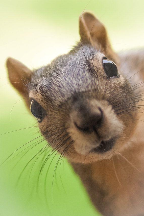 Why do squirrels lick leaf