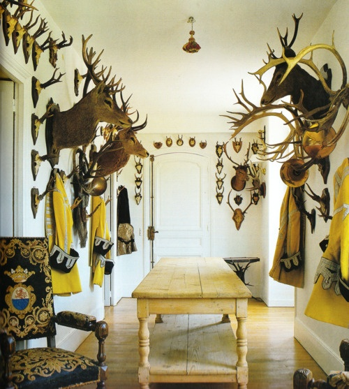 Great image.  Inspiration for putting Pauls taxidermy in his office..