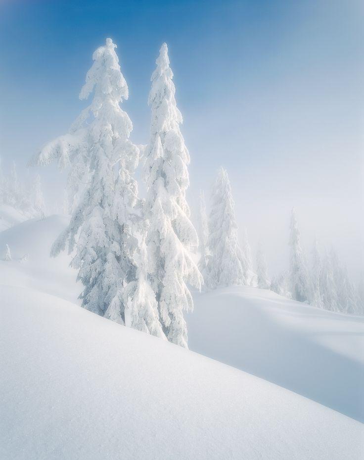 CANADA - British Columbia - Mt. Seymour Provincial Park #winter snow white tree