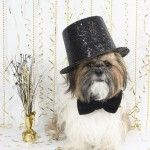 New Year's Resolutions for You and Your Pet - Pet Poison Helpline