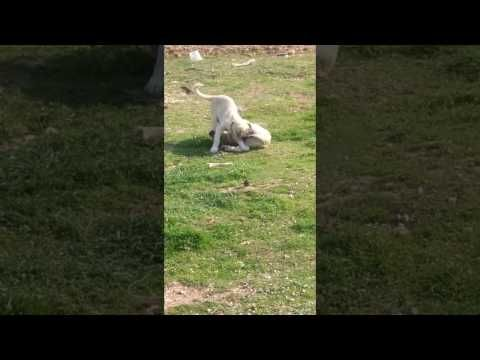 Komik köpekler/ Funny dogs :)) -  #dogs #funnydogs #puppy #doglover #animals #pet #cute #pets #animales #tagsforlikes Stop Your Dog's Behavior Problems! Click HERE to learn how!  - #Dogs
