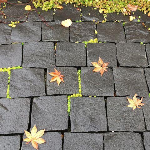 早、紅葉が散る季節に、、、 雨に濡れると更に風情を感じさせてくれるピンコロ石、隙間にはセダムや苔が繁殖しつつあり、このポーチの表情も歳月と共にブラッシュアップされていくわけです。よくある施工方法で目地を入れれば施工は容易ですが、こんなふうに緑化して変化しない、実は手間がかかる仕事なので費用も高いし時間が経たないと分かり難い事、施主さんの理解が無ければできない仕事です。アイトフースでは、欧米のように時を経ることで資産価値が増す住まいづくりを目指していきます。  @aitohus @aitoliv #北欧デザイン #北欧住宅#注文住宅 #新築計画  #高断熱高気密 #漆喰 #自然素材 #マイホーム#木窓 #myhome  #木製サッシ #マイホーム計画  #スカンジナビアン #広島注文住宅  #塗り壁  #こころ住宅展示場  #広島新築#住宅会社 #高断熱高気密玄関ドア #暖かい家 #玄関ポーチ #ピンコロ石 #紅葉 #こころモデルハウス #セントラルシティこころ