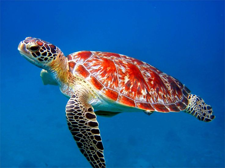 39 Best Sea Animals Images On Pinterest