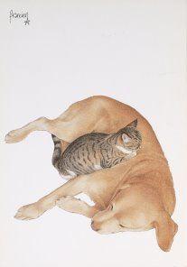 Postkaarten    Francienªs Katten    Francien Westering, van    C6042    Postkaarten, Honden, Tekeningen, Dieren, Katten,