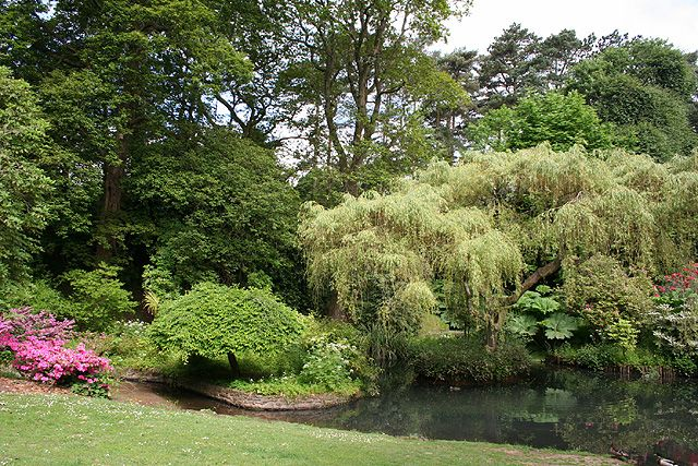 Clyne Gardens is a wonderful collection of parkland, woodland and international plants set just yards from the seafront.
