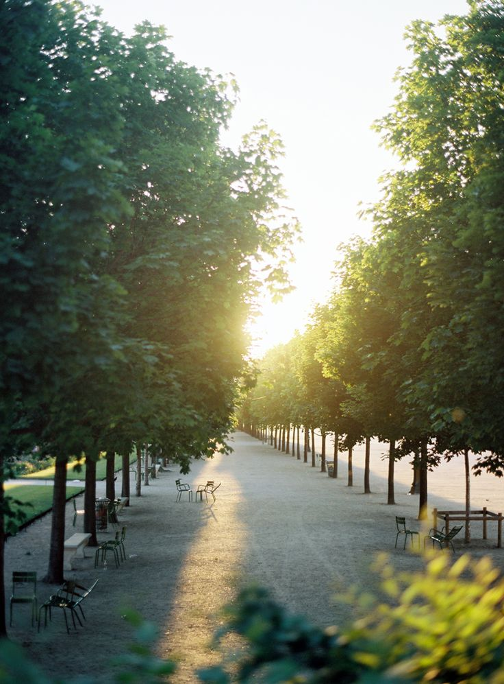 Tuileries at golden hour by @Alice Cartee Cartee Cartee Cartee Cartee Gao