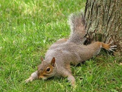 Ann Arbor squirrels are my favorite: Adorable Animals, Squirrels Chipmunks, Animals Squirrely, Funny Squirrels, Acting Squirrely, Funny Photos, Animals Land Squirrels