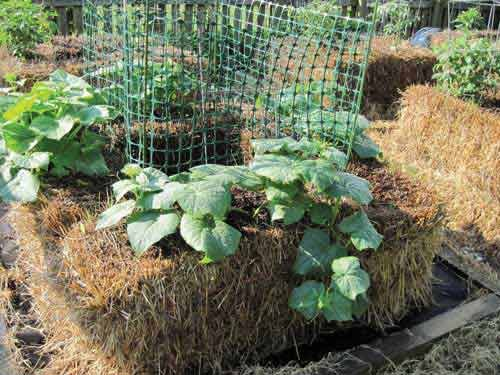 How To Make a Self-Fertilizing Hay Bale Garden Bed I've recently found an even better idea than stra