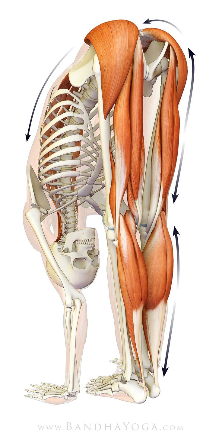 The Daily Bandha: Plantar Fasciitis, Myofascial Connections and Yoga #fascitis