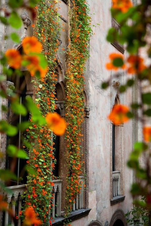 hanging nasturtium displays at the isabella stewart gardner museum | gardenista