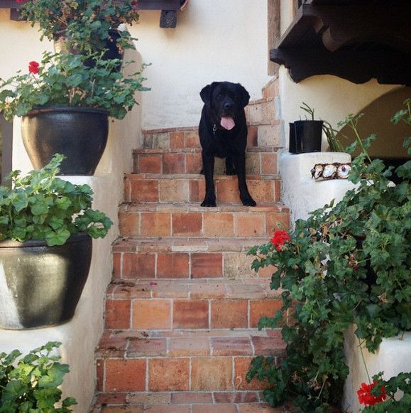 It's a Dog's Life - Nate Turner's Dog Is Having a More Glam Summer Than You - Lonny