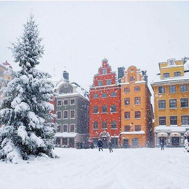 instagram @visitstockholm Oh Stockholm sous la neige ❄🌨⛄ Cela nous donne envie d'y repartir immédiatement pour s'émerveiller devant la place Stortorget toute blanche et faire une pause fika dans l'un des deux charmants cafés de la célèbre place (on vous en parle dans le cityguide)... Et vous, tentés par la jolie capitale scandinave ? Photo : @visitstockholm #stockholm #suède #stortorget #scandinave #scandinavie #fika #neige
