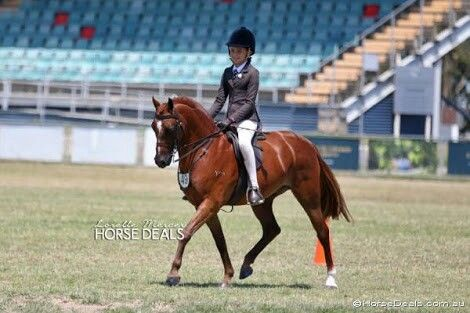 Small Show Hunter Pony