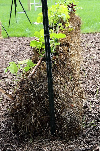 straw bale gardening instructions
