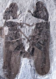 Case of Insect Interruptus Yields a Rare Fossil Find.  Image by Shu Li and Chen Wang.