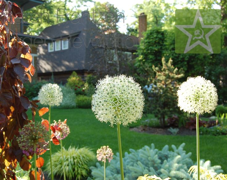 kaaren frantzen garden revolution perennial gardensagapanthus plantrevolutionsillinoisgarden ideaschicagobackyard ideas - Flower Garden Ideas Illinois