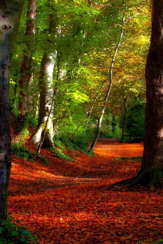 Fall in woods, Dublin, Ireland. It is my dream to someday be here