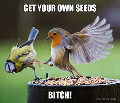 Top 30 Funny Animal Quotes and Pics #Humor Memes