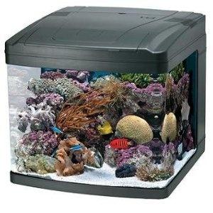 Oceanic 82052 BioCube Aquarium, 29-Gallon: 82052 Biocube, Saltwater Aquarium, Oceanic 82052, Fish Tanks, Biocube Aquarium, Pet, Aquariums, 29 Gallon
