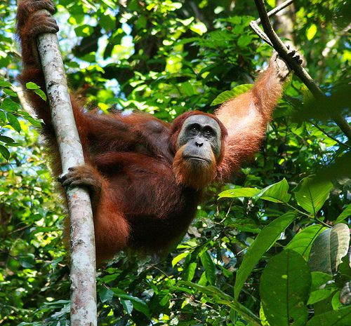 Tropical Rainforests Food And Non Food Products