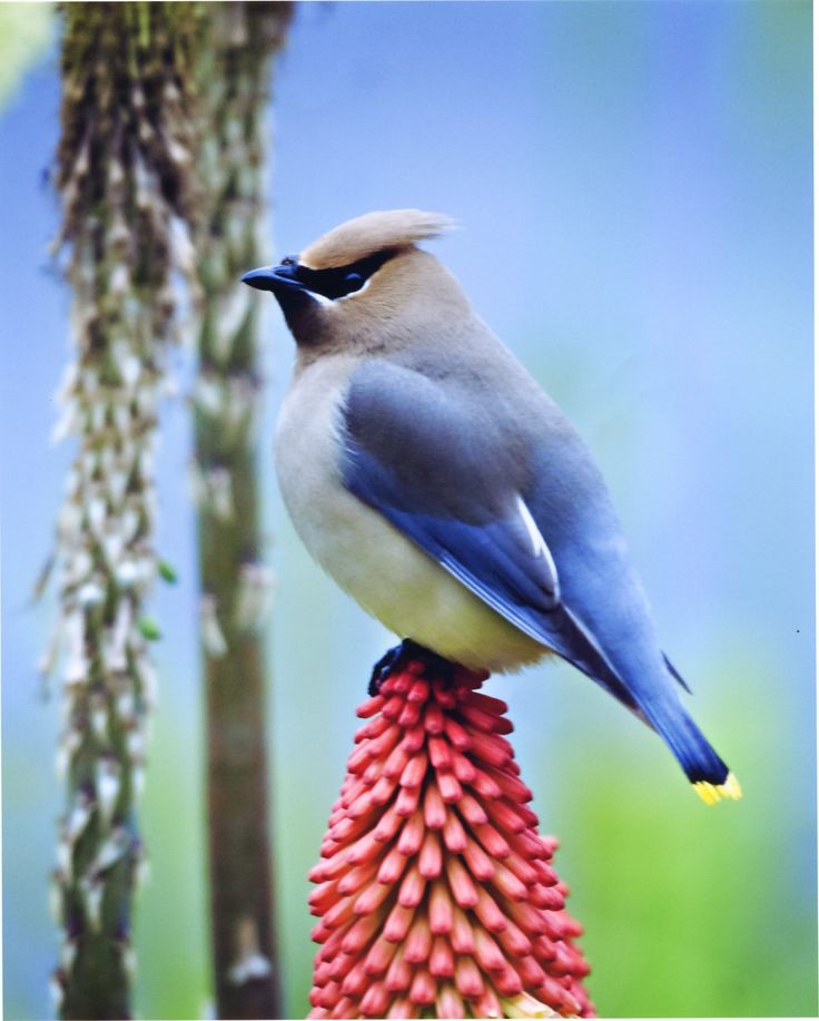 1000+ Images About Birds In Color On Pinterest
