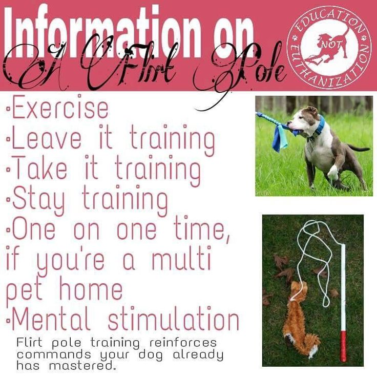 dog flirt pole for sale