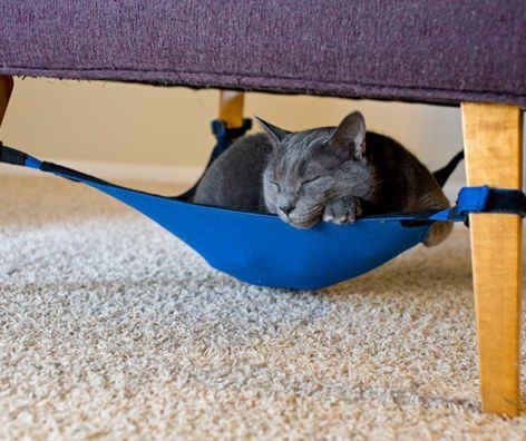 This cat hammock.