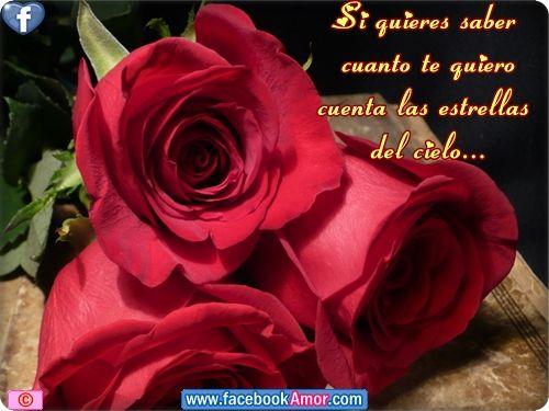Tarjetas De Amor Con Rosas Rojas | flores de rosas rojas con frases de amor