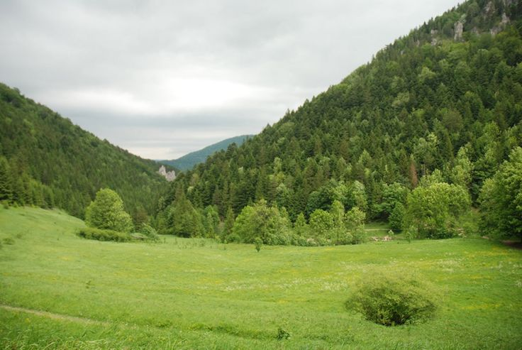 Zielony oddech od codzienności