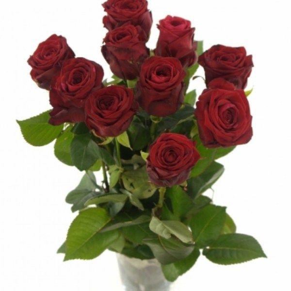 ruda-ruze-red-naomi-60cm-xl-45961-3zaq6