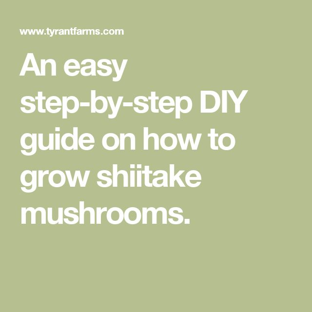 An easy step-by-step DIY guide on how to grow shiitake mushrooms.
