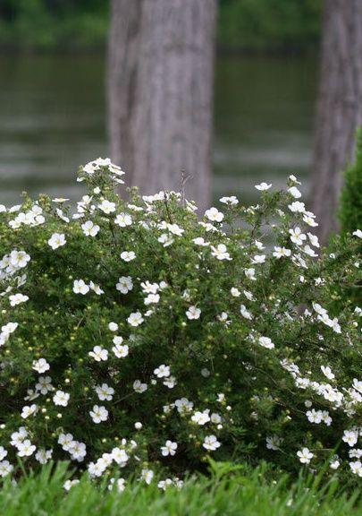 12 best Salt Tolerant Plants images on Pinterest Gardens Flower