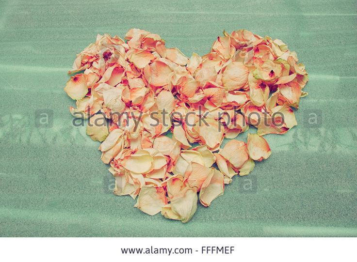 Download this stock image: Heart of dried rose petals on the green foam lining. - FFFMEF from Alamy's library of millions of high resolution stock photos, illustrations and vectors.