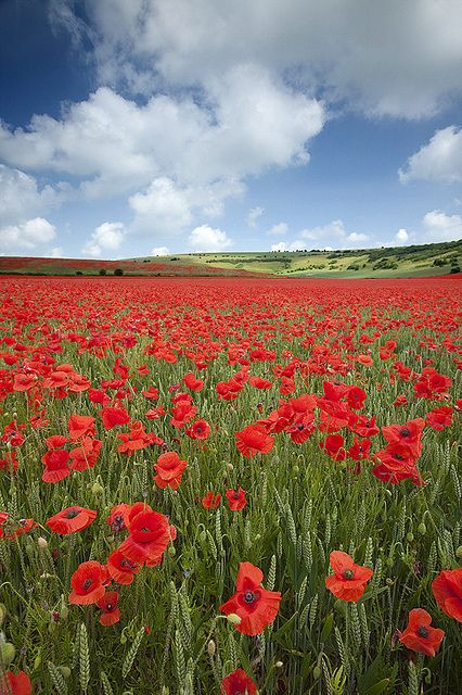 Devils Dyke Poppyfield - excellent photo by antony spencer, via Flickr. The Devils Dyke is a beautiful area only a few miles from my hometown of Brighton & Hove