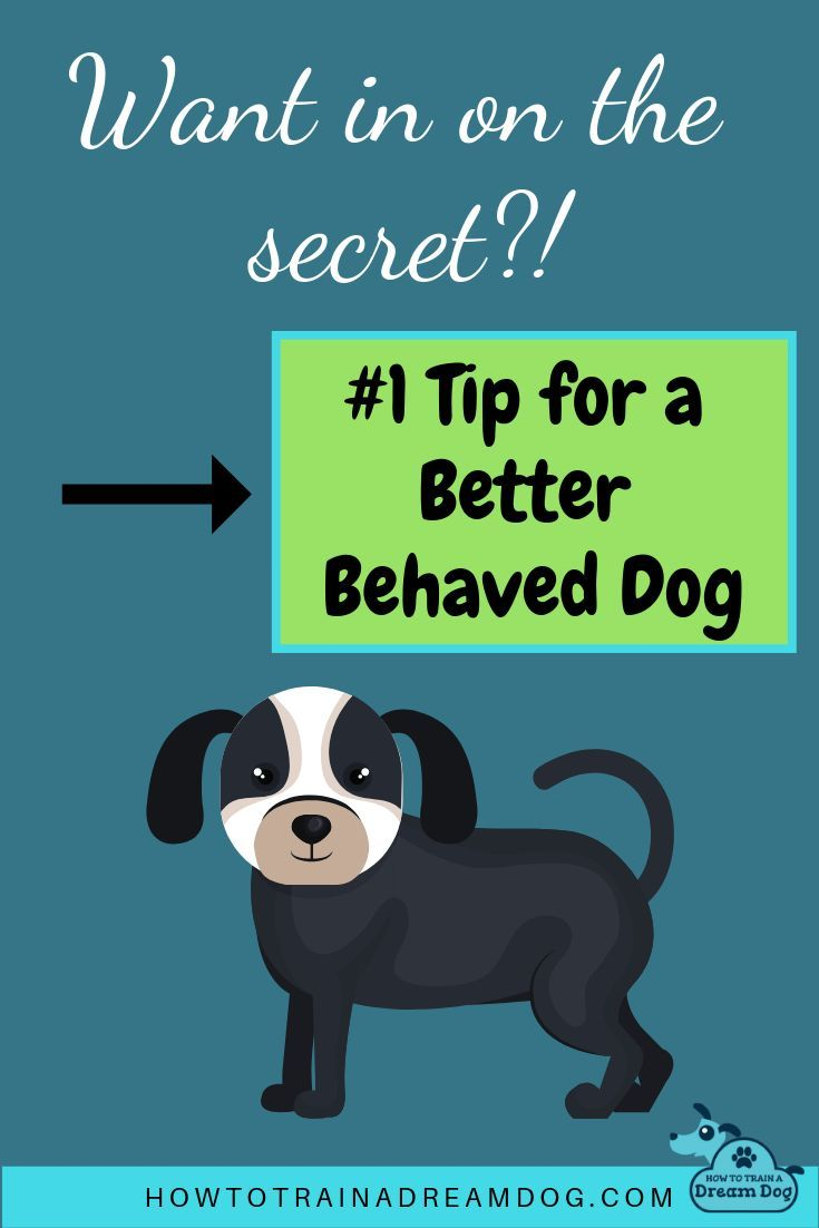 Successfully Train Your Dog Our 1 Must Have Tip Training